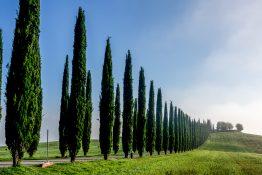 Roland Seichter Fotografie - Agriturismo Poggio Covili 1