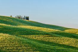 Roland Seichter Fotografie - Cipressi di San Quirico 2