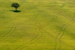 Roland Seichter Fotografie - Lonely Tree